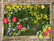 Obrazek kwiaty na tle trawa Zdjęcie Stock