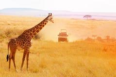Obrazek piękna żyrafa przy zmierzchem, Afryka Zdjęcia Royalty Free