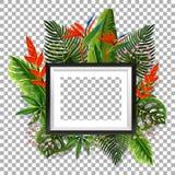 Obrazek rama z ptakiem raj w tle ilustracja wektor