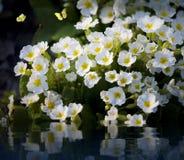 obrazek wiosna Zdjęcie Stock