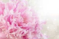 Obrazek z peoniami Fotografia Stock