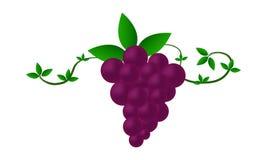 Obrazkowi winogrona Fotografia Stock