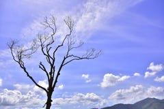 Obrazuje o Brazylia Krajobraz obrazy royalty free