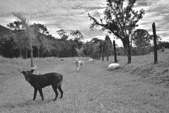 Obrazuje o Brazylia Krajobraz obraz stock