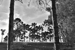 Obrazuje o Brazylia Minas Gerais obrazy royalty free