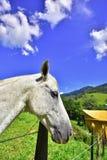 Obrazuje o Brazylia Minas Gerais zdjęcie stock