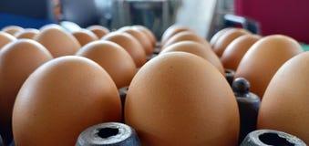 Obrazuje wiele jajka zdjęcie royalty free