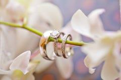 Obrączki Ślubne Fotografia Stock