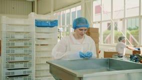 Obrero que comprueba la empaquetadora Fábrica del caramelo almacen de metraje de vídeo