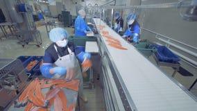 Obreros que preparan pescados para cortar en un transportador, cierre para arriba almacen de metraje de vídeo