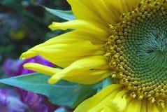 obrońca kwiatów Obrazy Royalty Free