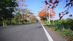 Obruszenia dolly strzału kwiatu drzewa pomarańczowa strona droga zbiory