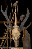 Obrządkowa zwierzęca czaszka w domowym Mentawai plemieniu Fotografia Stock