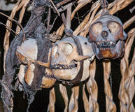 Obrządkowa zwierzęca czaszka w domowym Mentawai plemieniu Obraz Stock
