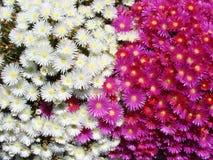 Obrzeża miasteczko Redondale Hiszpania Naturalni widoki Hiszpański las różnorodni wiosna kwiaty i fotografia stock