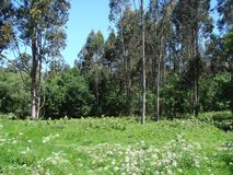 Obrzeża miasteczko Redondale Hiszpania Naturalni widoki Hiszpański las różnorodni wiosna kwiaty i zdjęcie stock
