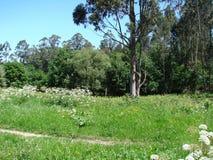Obrzeża miasteczko Redondale Hiszpania Naturalni widoki Hiszpański las różnorodni wiosna kwiaty i fotografia royalty free