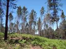 Obrzeża miasteczko Redondale Hiszpania Naturalni widoki Hiszpański las różnorodni wiosna kwiaty i obrazy royalty free