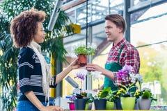 Obsługuje słuchanie klient podczas gdy pracujący jako kasjer w nowożytnym kwiatu sklepie obraz royalty free