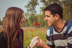 Obsługuje dawać kobiecie pojedynczego czerwonego anemonowego kwiatu w anemonu polu Fotografia Stock