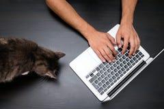 Obsługuje działanie w zwierzęcia domowego życzliwym biurze z kotem używać laptop co zdjęcia royalty free