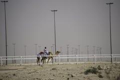 Obs?uguje je?dzieckiego wielb??da przy biegowym ?ladem w Katar obrazy royalty free