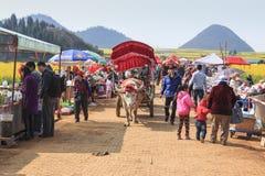 Obsługuje jechać waterbuffalo dla turystów wśród rapeseed kwiatów poly Luoping w Yunnan Chiny Obrazy Stock