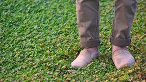 Obsługuje pozycję na zielonych rośliien unikalnej akcyjnej fotografii Zdjęcie Royalty Free