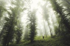 Obsługuje pozycję pod gigantycznymi drzewami w tajemniczym lesie Obrazy Royalty Free