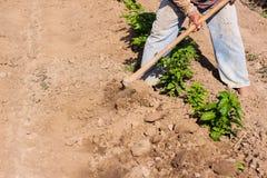 Obsługuje pracującego rolnictwo, używać motykę przynosić ziemię obraz stock