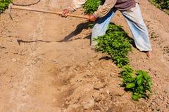 Obsługuje pracującego rolnictwo, używać motykę przynosić ziemię zdjęcie stock