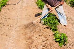 Obsługuje pracującego rolnictwo, używać motykę przynosić ziemię fotografia royalty free
