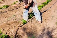 Obsługuje pracującego rolnictwo, używać motykę przynosić ziemię obrazy royalty free