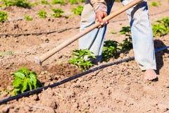 Obsługuje pracującego rolnictwo, używać motykę przynosić ziemię fotografia stock