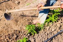 Obsługuje pracującego rolnictwo, używać motykę przynosić ziemię obrazy stock