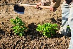 Obsługuje pracującego rolnictwo, używać motykę przynosić ziemię obraz royalty free