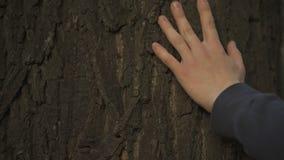 Obsługuje rękę delikatnie dotyka drzewnego bagażnika, naturę i lasową ochronę, ekologii opieka zbiory