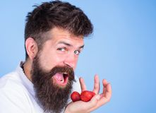Obsługuje szczęśliwą twarz otwarty usta z brodą je truskawki Chce próbować mój jagodowego mężczyzna rozochocony iść jeść dojrzałe Fotografia Royalty Free