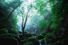 Obsługuje badacza las, Phu Soja Dao, Tajlandia Zdjęcia Royalty Free