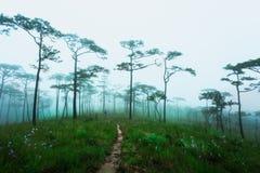 Obsługuje badacza las, Phu Soja Dao, Tajlandia Obrazy Royalty Free