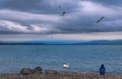Obsługuje obsiadanie na jeziornym brzeg na deszczowym dniu Obrazy Royalty Free
