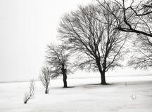 Preto enevoado & branco Imagens de Stock Royalty Free