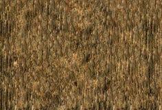 Obscuridade de madeira da folhosa da casca do pinho do teste padrão da casca Fotos de Stock Royalty Free