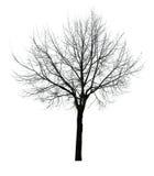 A obscuridade deixa a árvore livre isolada fotografia de stock royalty free