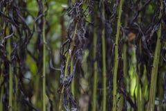 Obscuridade e fundo murchado verde das hastes Imagem de Stock