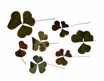 Obscuridade triangular - folhas lisas verdes sem o stru claramente definido Fotos de Stock Royalty Free