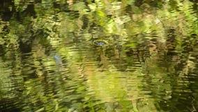 Obscuro da reflexão da luz solar na superfície da água que flui no rio siga o foco para cancelar filme