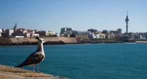 Observação da gaivota Imagem de Stock
