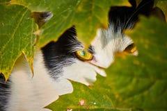 Observação do gato imagens de stock royalty free
