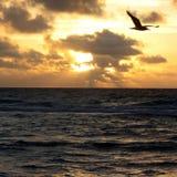 Observación de la puesta del sol por el océano fotos de archivo